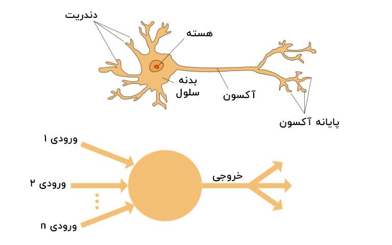 نورون های شبکه عصبی