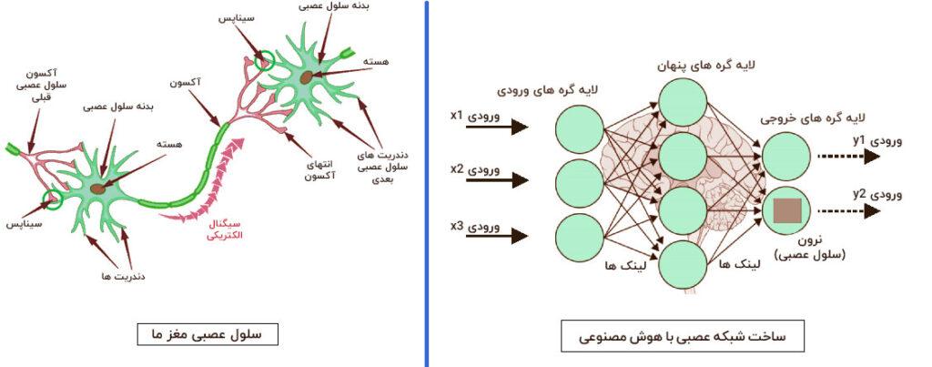 مقایسه شبکه عصبی عمیق و شبکه عصبی انسان