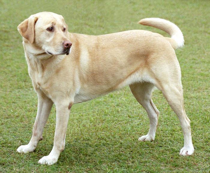 تصویر سگ برای شناسایی با torchvision