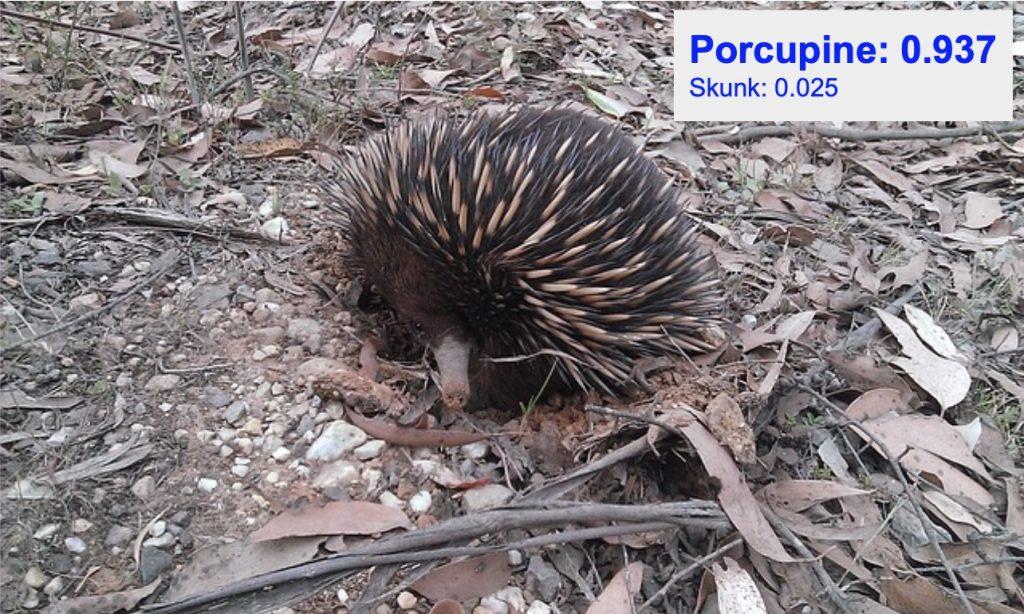 دقت تشخیص کلاس porcupine