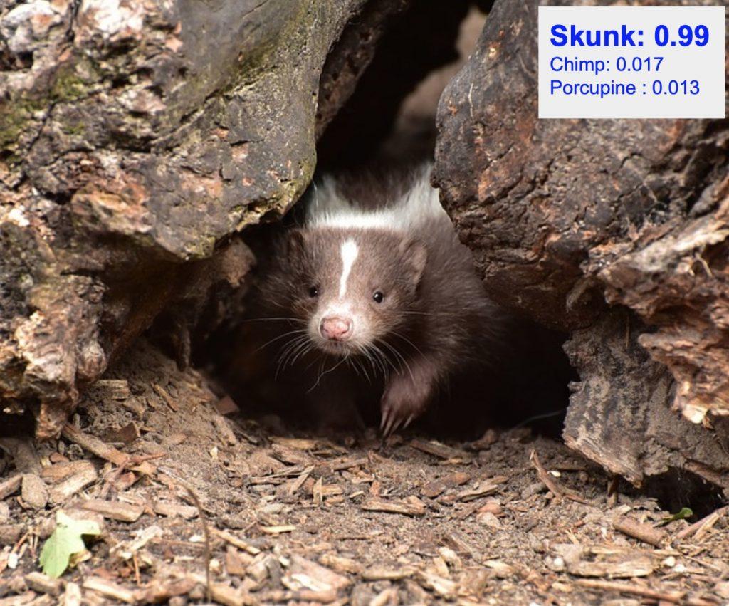 دقت تشخیص کلاس skunk