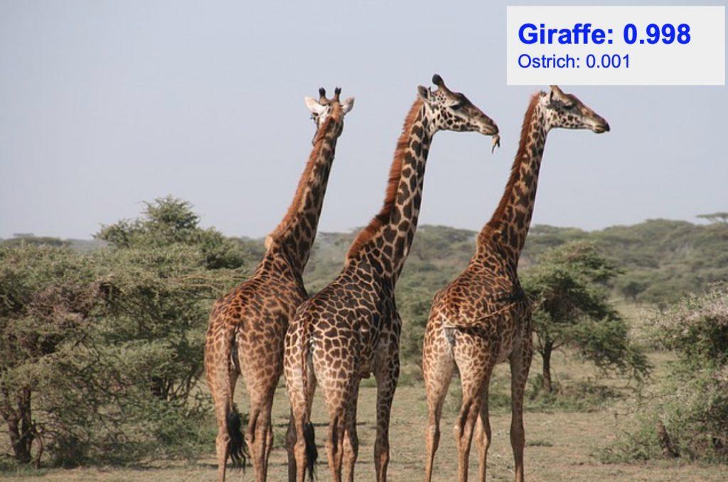 دقت تشخیص کلاس giraffe
