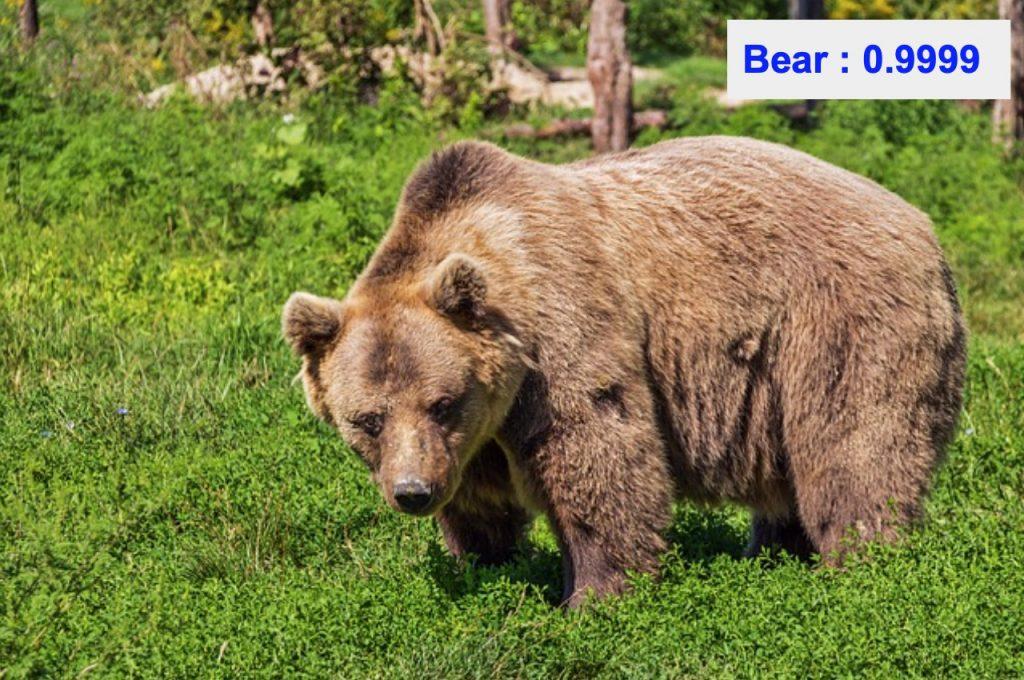 دقت تشخیص کلاس bear