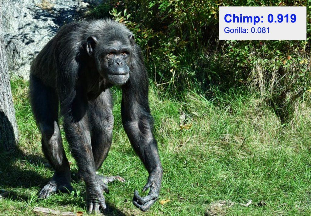 دقت تشخیص کلاس chimp