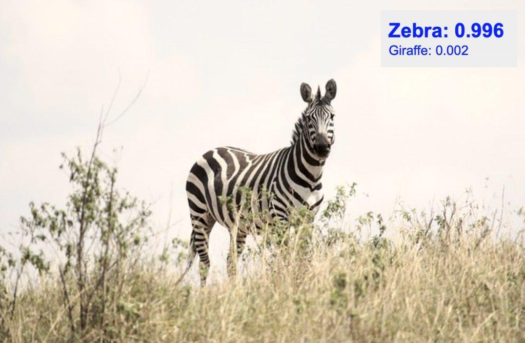 دقت تشخیص کلاس zebra