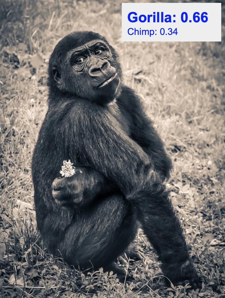 دقت تشخیص کلاس gorilla