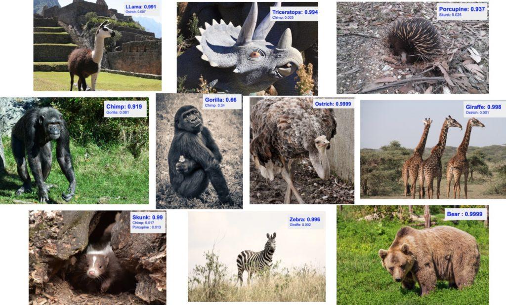کلاسه بندی تصاویر حیوانات در PyTorch