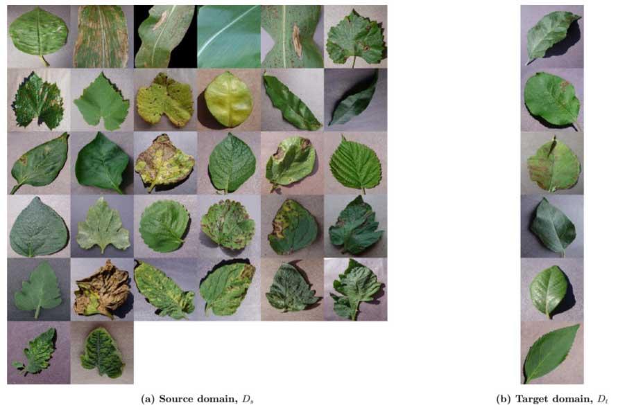 مجموعه داده تصاویر بیماری گیاهان